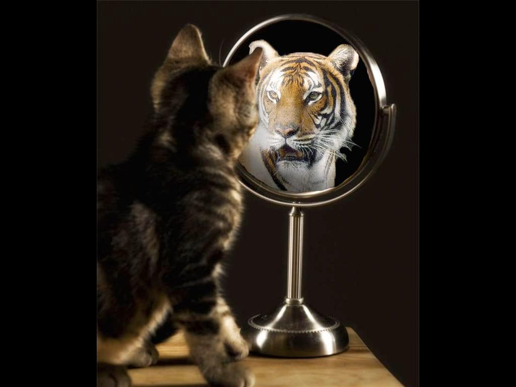 Falta de autoconfiança - 25 ações práticas para melhorar a autoestima
